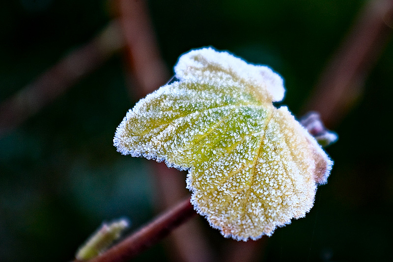 Frosty leave