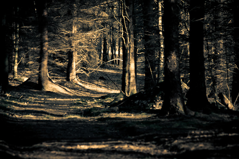 Photo of the Day: A dark Passage