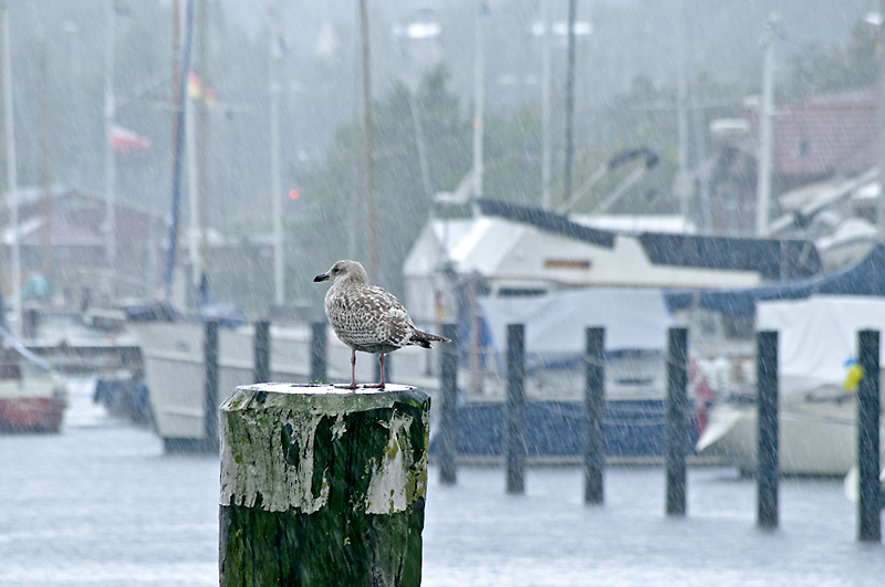 Photo of the day: Waiting in the Rain