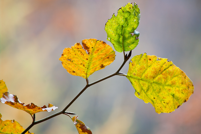 Photo of the Day: October Branch