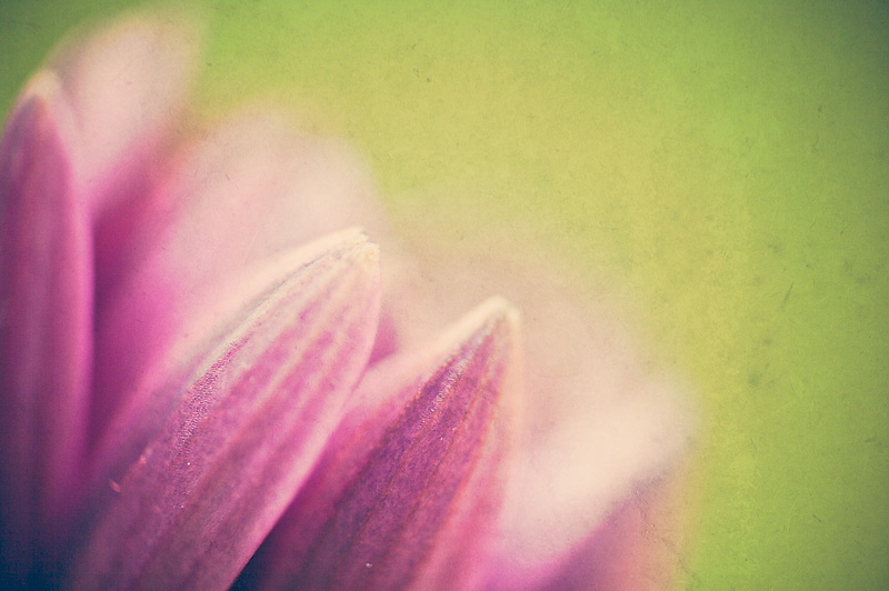 Photo of the Day: Petals