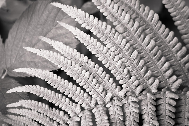 Photo of the Day: Silver Fern