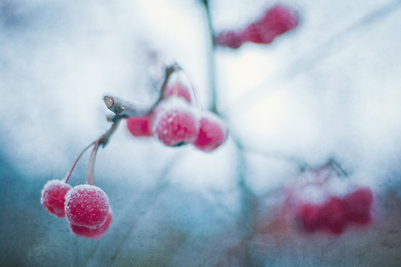 Photo of the Day: Cold Cherries