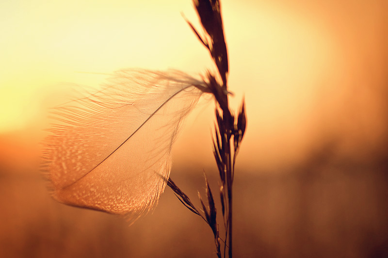 Photo of the Day: Light as a Feather