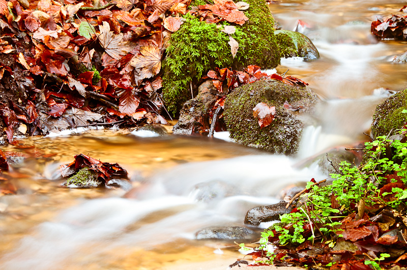 Photo of the Day: Forest Stream