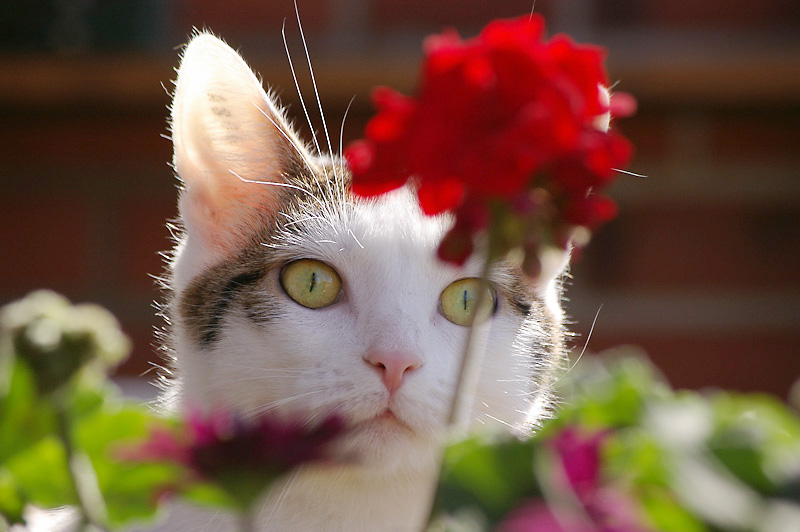 Photo of the Day: Lumi likes Flowers