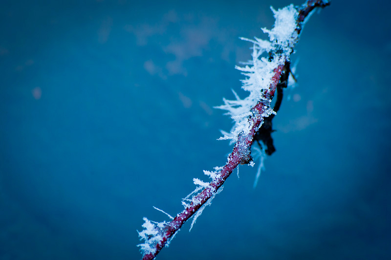 Photo of the Day: Ice Thorns