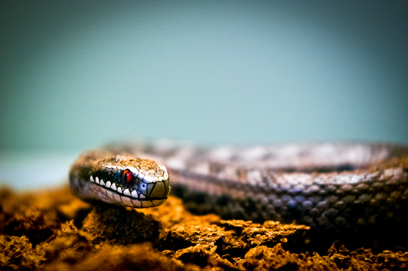 Photo of the Day: Snake's Eyes