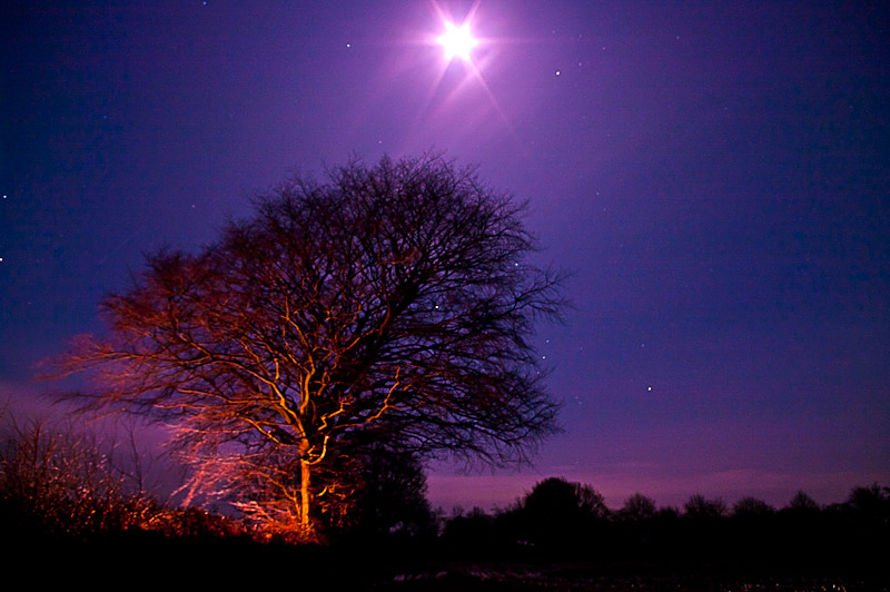 Photo of the Day: The Tree and the Moon