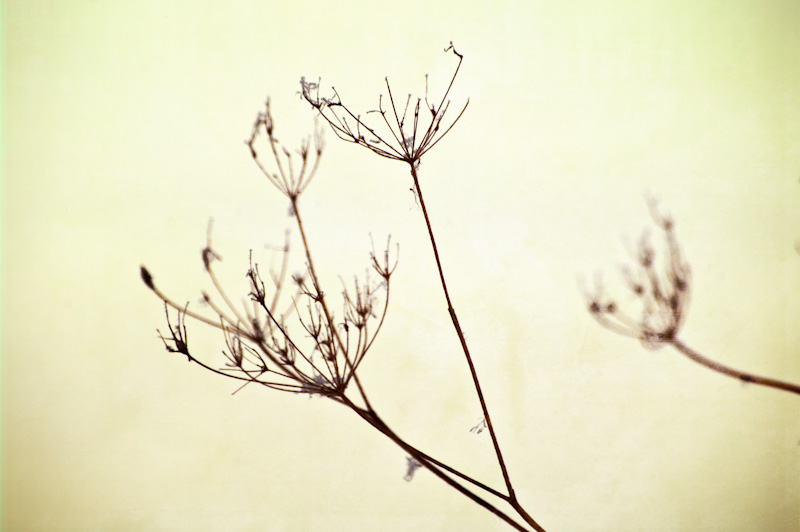 Photo of the Day: Winter Filigree