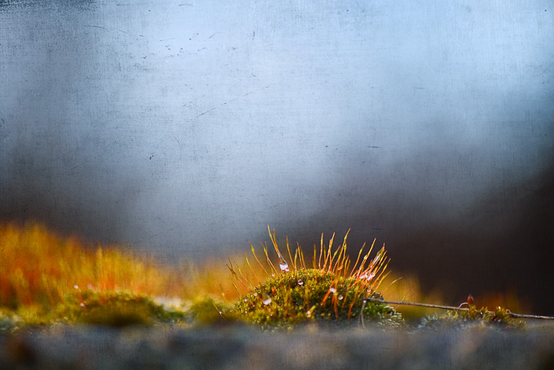 Photo of the Day: Little Forests