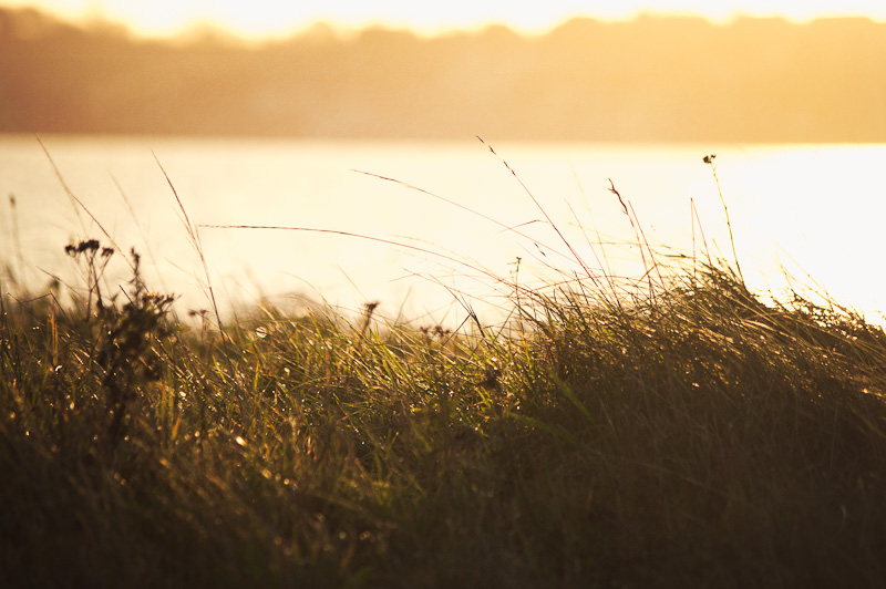 Photo of the Day: Morning Breeze