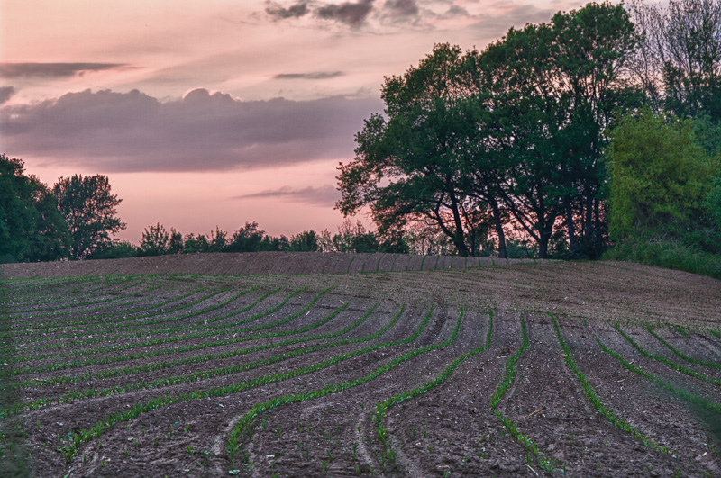 Photo of the Day: Corn Hills