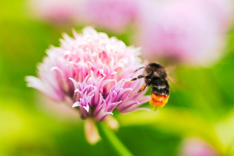 Visit my flower Garden