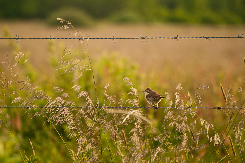Photo of the Day: Sitting on a Fence