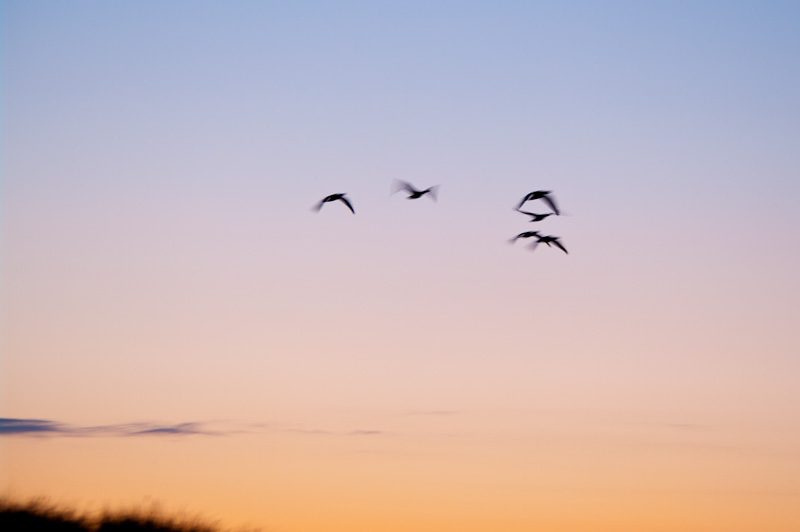Photo of the Day: Flying by