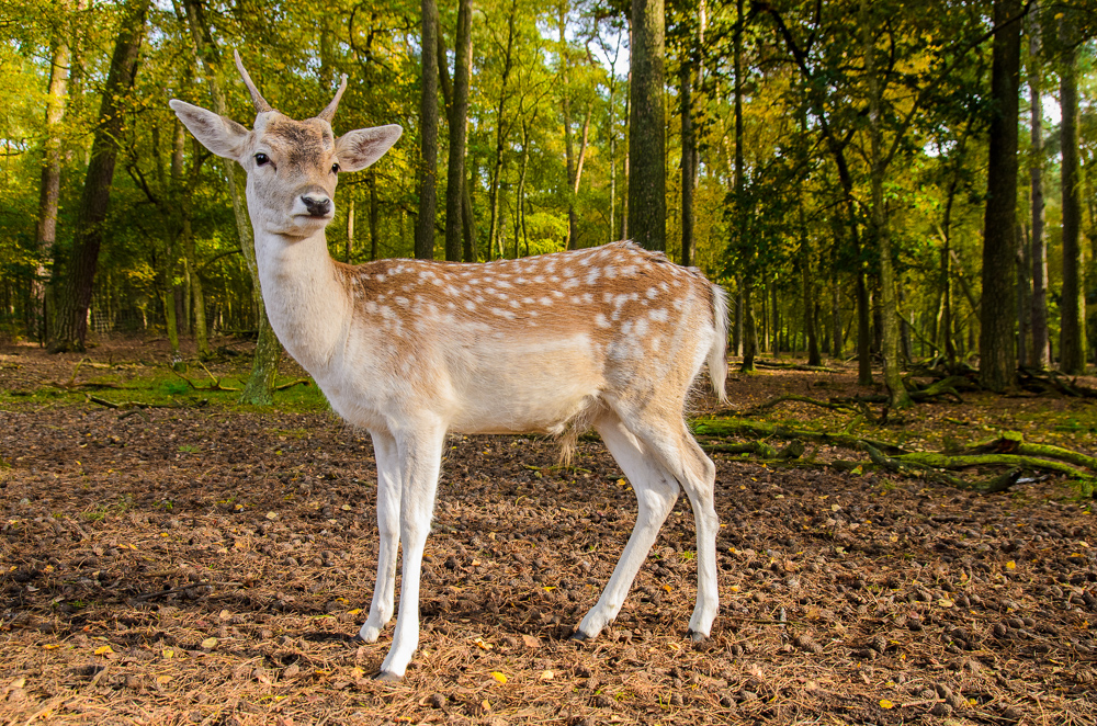 The deer of Hamburg